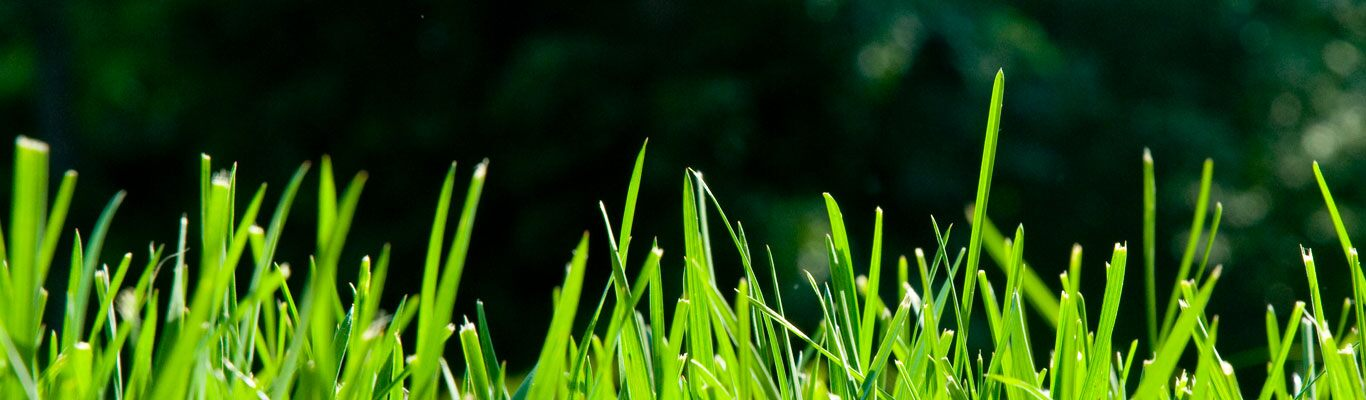 Lawn Care for a Thicker Greener Lawn with a Mulching Lawn Mower